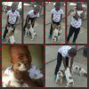 Siyanda Dibate from Kyalami with puppies on plot