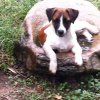 Puppy from Mandy (Swaziland)