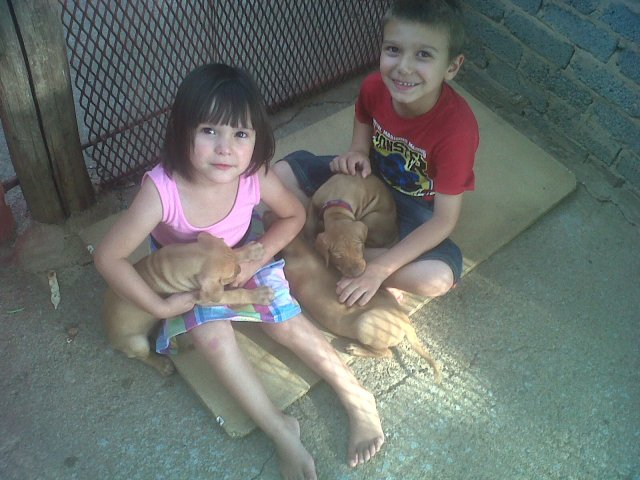 Kaden and Isabella with Vizsla puppies