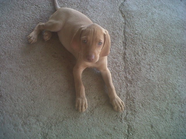 Puppy from Aurea Westfehling (Cape Town)